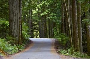 pavimentazione stradale della foresta pluviale