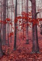 foglie di autunno nella foresta nebbiosa