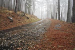 strada in una foresta nebbiosa foto
