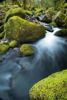 ruscello selvaggio nella vecchia foresta, acqua sfocata in movimento