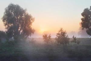 fitta nebbia nel boschetto foto