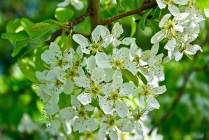 i rami fioriti degli alberi nella foresta foto