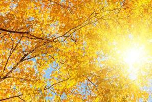 foglie giallo rosso foto