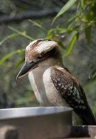 uccello tropicale foto