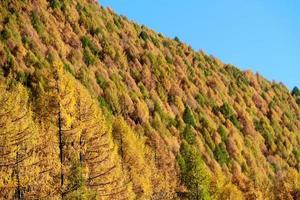 foresta autunnale mostra il suo colore nella montagna delle alpi italiane