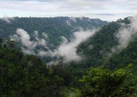 nebbia dopo la pioggia sulla montagna