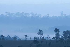 parco nazionale di thung salaeng luang, phatchabun, thailandia. foto