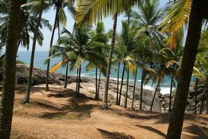 palme da cocco sulla riva dell'oceano