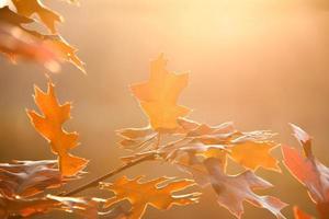 primo piano rosso delle foglie di autunno
