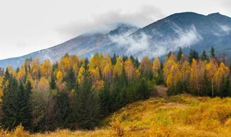 bellissimo paesaggio autunnale nelle montagne karpaty nella foresta