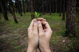 mani che tengono piccola pianta mostrano un'idea conservatrice. foto