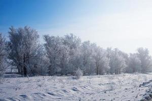bellissimo paesaggio invernale con strada e alberi innevati. foto
