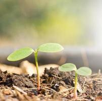 germoglio verde in crescita foto