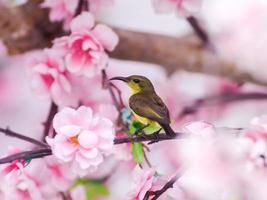 uccello del sole. foto