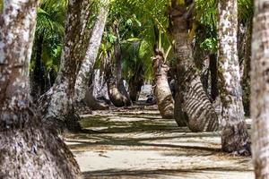 labirinto di alberi di cocco foto