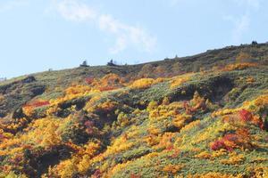 foglie colorate in hachimantai