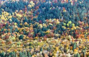 sfondo di alberi gialli e arancioni in autunno in una foresta foto