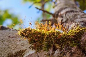 pianta di felce che cresce sul vecchio ceppo di albero in giardino.