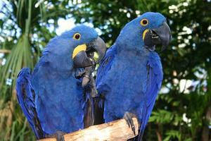 i fratelli blues