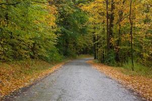 strada di campagna in autunno