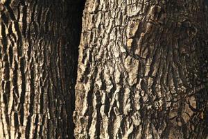 vecchia struttura di corteccia di albero foto