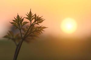 giovane pianta con sfondo tramonto foto