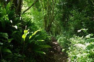 sentiero nel bosco foto