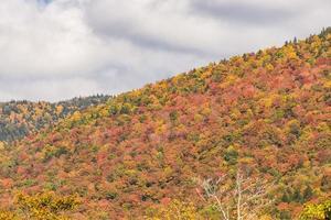 fogliame di autunno nella foresta nazionale della montagna bianca, New Hampshire foto