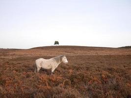 selvaggio cavallo grigio in piedi inverno nuovo parco nazionale della foresta