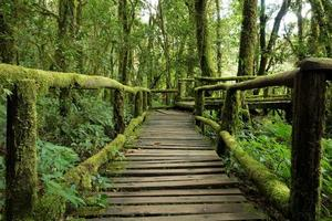 bella foresta pluviale al sentiero natura ang ka, Thailandia. foto