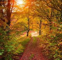 colorato alba autunnale nella foresta con la vecchia strada foto
