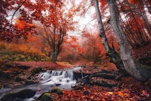 foresta nebbiosa autunnale con un sacco di foglie rosse cadute.