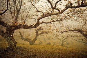 alberi nella nebbia mattutina foto