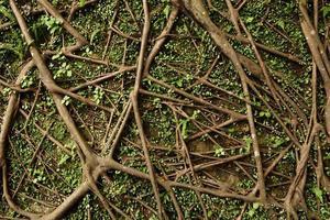radice dell'albero