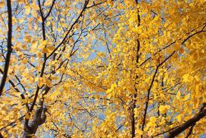 foglie di autunno con cielo blu come sfondo