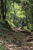 sentiero percorso