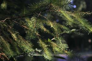 albero x-mass alla luce solare naturale.