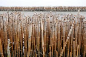 muro di bambù foto