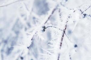 brina e neve sugli alberi nella foresta invernale foto