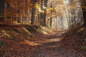 percorso attraverso il parco d'autunno foto