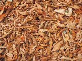 superficie del terreno nel parco con foglie cadute