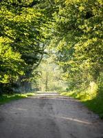 vicolo di strada di campagna illuminato dal sole della sera