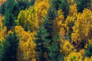betulle del vulcano etna in autunno