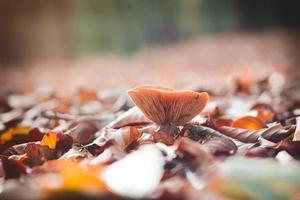 fungo nel fuoco selettivo della foresta