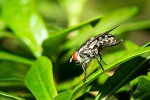 la piccola mosca. foto