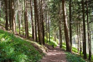 legno di pino