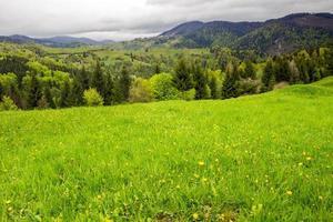 alberi di pino vicino a valle in montagna su una collina foto