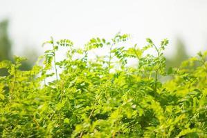 cespugli verdi alla luce del sole foto