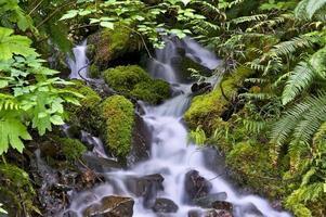 torrente muschioso roccioso