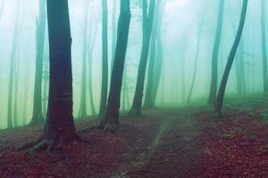 nebbia pericolosa sul sentiero
